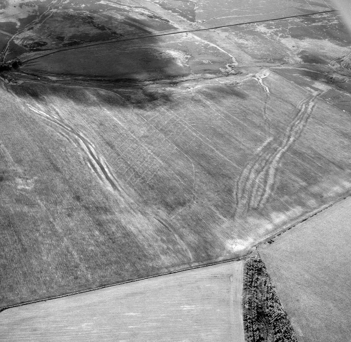 Medieval/Post-medieval Braided Trackway - Cropmark page